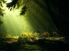 Nature Forêt féerique