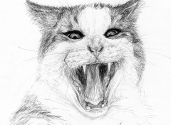 Art - Pencil Mon Chat, Oupss