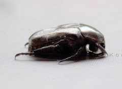 Animals Beetle.