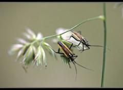 Animals insecte