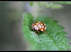 Animaux insecte