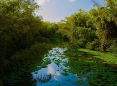 Nature La rivière Ste-Suzanne et ses jacinthes d'eau