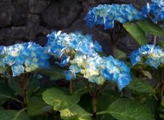 Nature Fleurs bleus