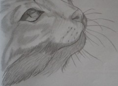 Art - Pencil dessin chat