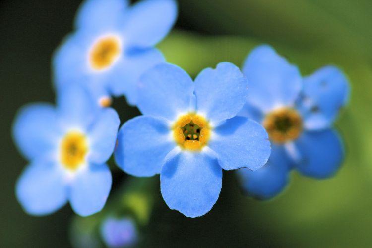 Wallpapers Nature Flowers fleur