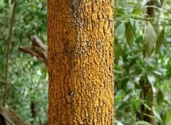 Nature Mayotte