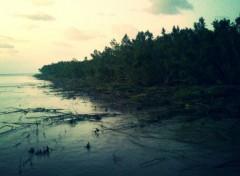 Nature Mangroves