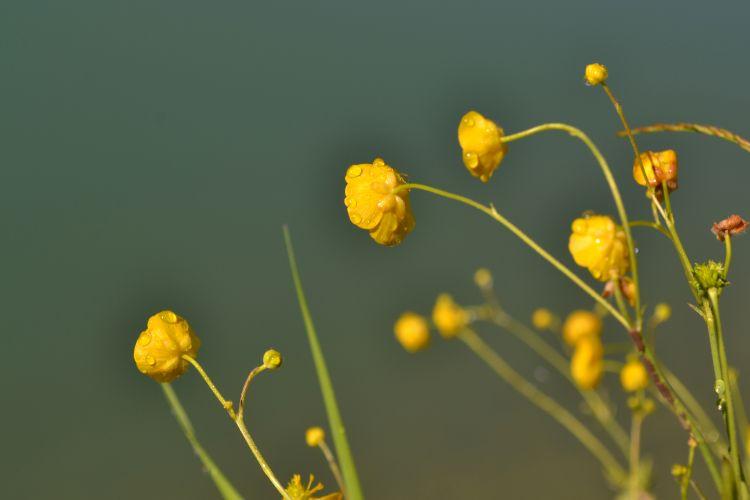 Fonds d'écran Nature Fleurs Wallpaper N°354244