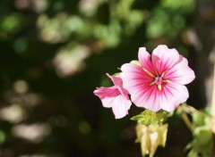 Nature une fleur argentique