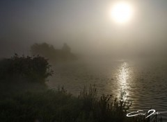 Nature la brume