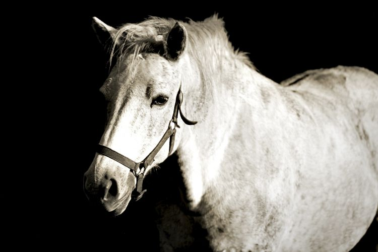 Wallpapers Animals Horses Wallpaper N°360790