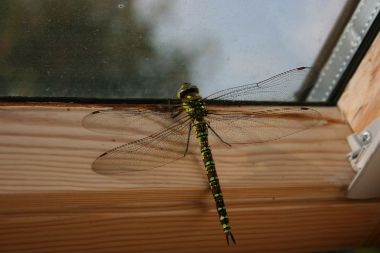 Wallpapers Animals Insects - Dragonflies Les insectes sont magnifiques