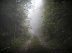 Nature Chemin Brumeux