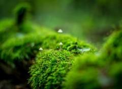 Nature Little fungus