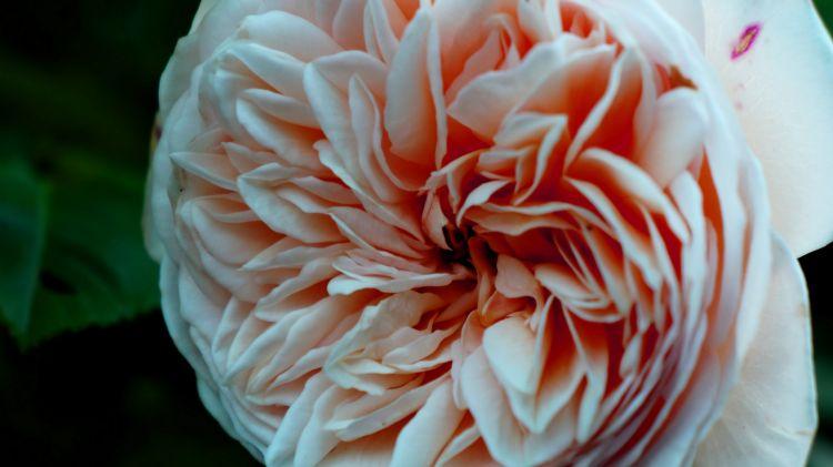 Fonds d'écran Nature Fleurs Wallpaper N°361564