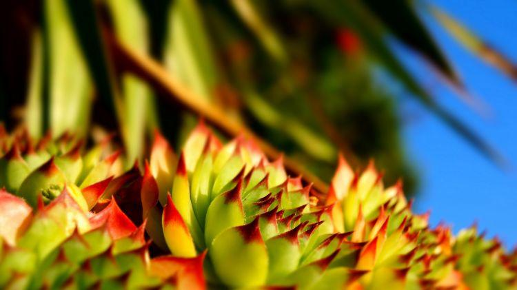 Fonds d'écran Nature Plantes grasses Wallpaper N°361563