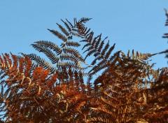 Nature feuilles !