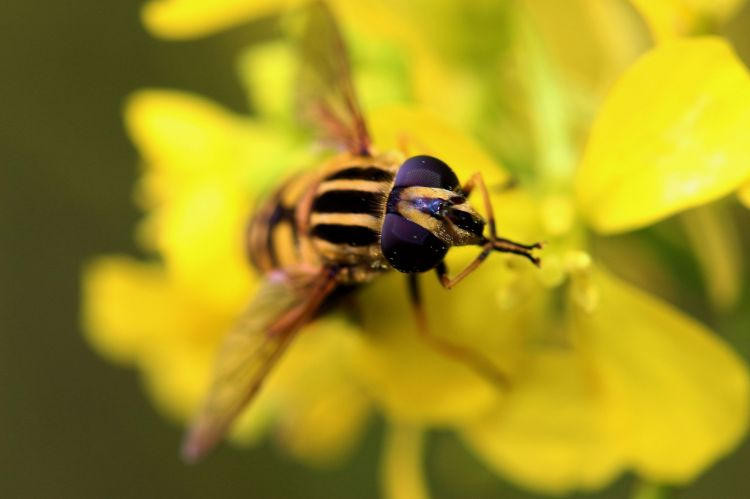 Wallpapers Animals Insects - Bees, Wasps La priére.