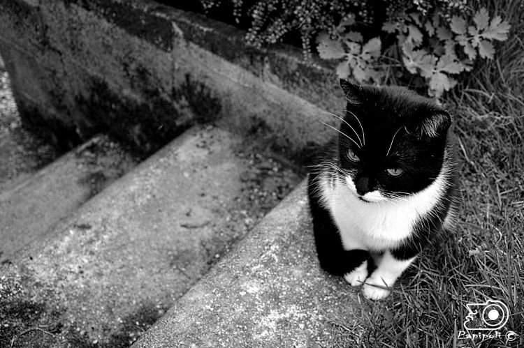Wallpapers Animals Cats - Kittens C'est le chat