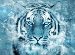 Animals Tigre