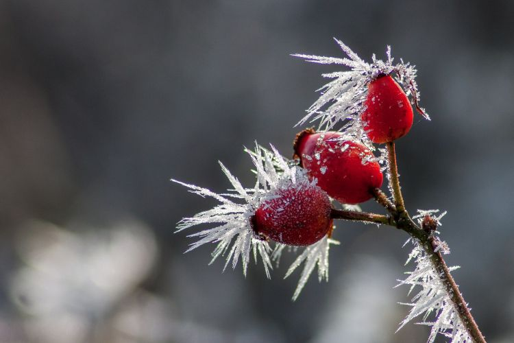 Wallpapers Nature Saisons - Winter le givre