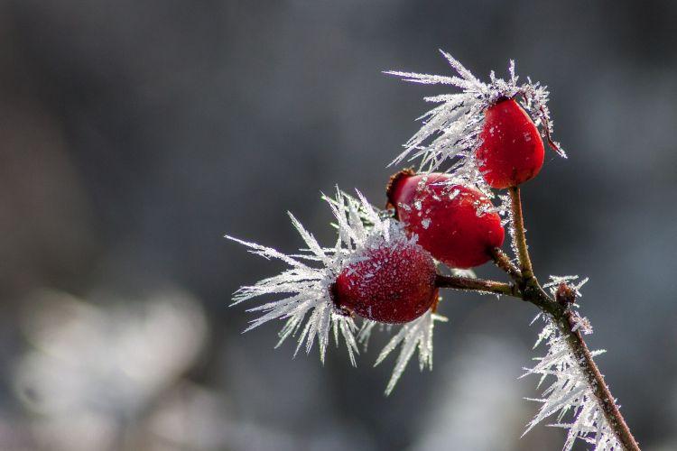 Wallpapers Nature Saisons - Winter le givre