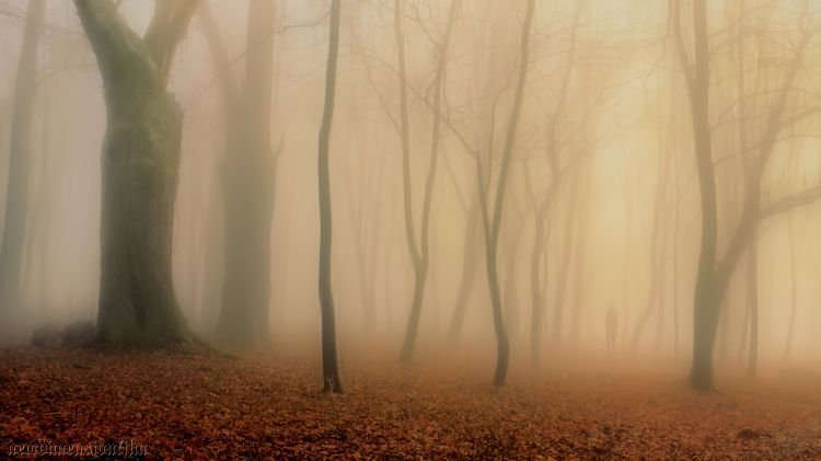 Fonds d'écran Nature Arbres - Forêts Impressions d'automne 12/2013