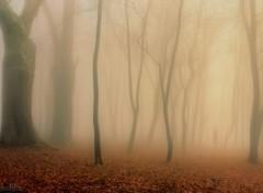 Nature Impressions d'automne 12/2013
