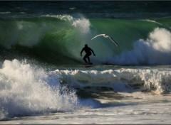 Nature Le surfeur et la mouette