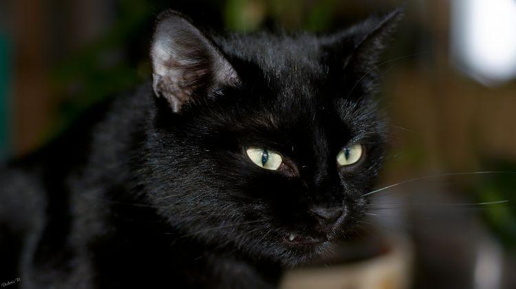 Wallpapers Animals Cats - Kittens Regard assassin