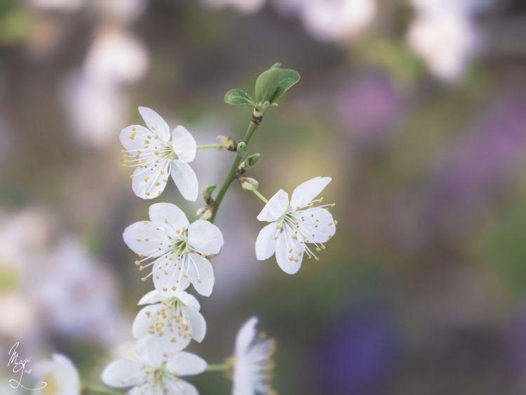 Fonds d'écran Nature Fleurs Wallpaper N°370906