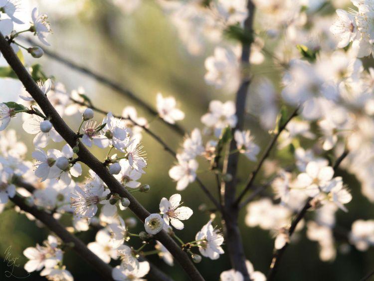 Fonds d'écran Nature Fleurs Wallpaper N°370907