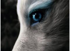 Animaux Oeil de Loup