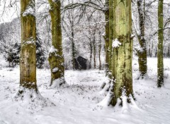 Nature Ma cabane au fond du jardin