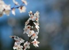 Nature le printemps est arrivé