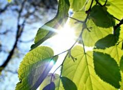 Nature soleil traversant les feuilles