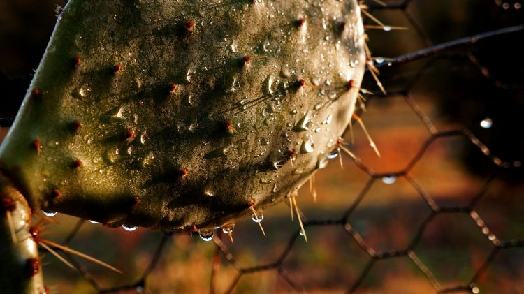 Fonds d'écran Nature Cactus The sun after rain