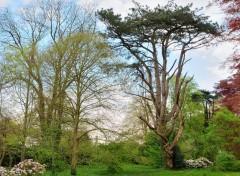 Nature L'arbre tordu