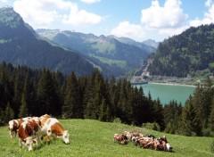 Voyages : Europe Paysage Suisse