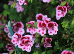 Nature fleur