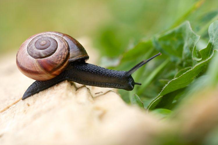 Wallpapers Animals Snails - Slugs Wallpaper N°376332