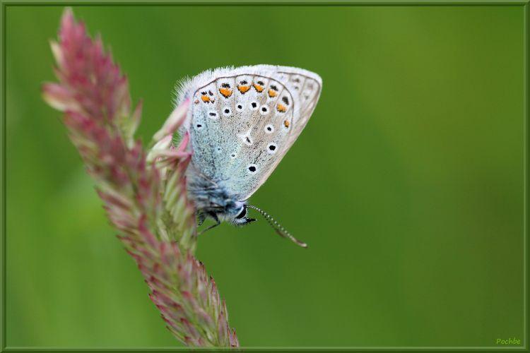 Fonds d'écran Animaux Insectes - Papillons Wallpaper N°377476