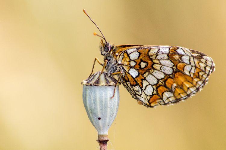 Fonds d'écran Animaux Insectes - Papillons Wallpaper N°378039