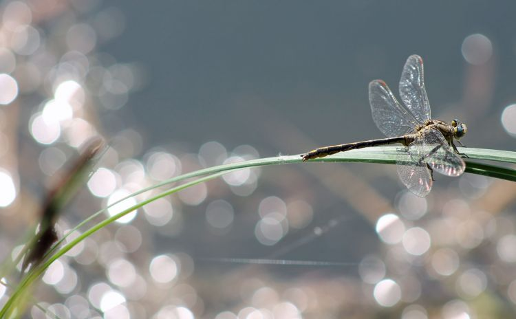 Wallpapers Animals Insects - Dragonflies Wallpaper N°378469