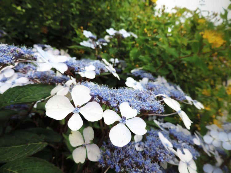 Fonds d'écran Nature Fleurs Wallpaper N°379102