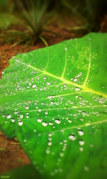 Fonds d'écran Art - Numérique Nature - Arbres, Plantes Wallpaper N°379442