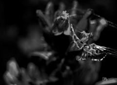 Animaux Arachnophobia