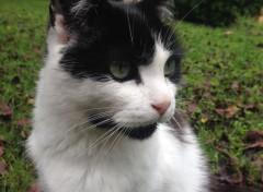 Animaux Petit chat dans le jardin