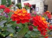 Nature Fleurs de Beaugency