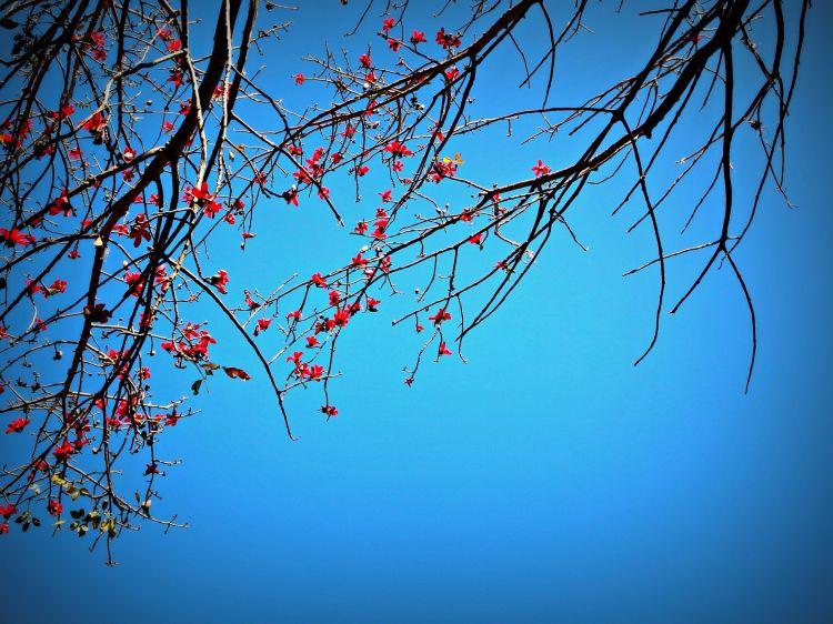Fonds d'écran Nature Fleurs Wallpaper N°381636